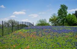 Wildflowergebied in de lente van Texas Stock Afbeelding