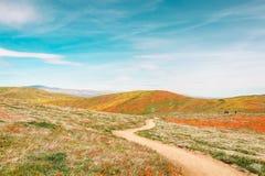 Wildflowergebieden royalty-vrije stock afbeelding