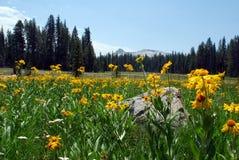 Wildflowergrasland Stockfotos