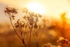 Wildflowerinstallaties op de herfstweide stock afbeelding