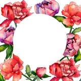 Wildflowerpfingstrosen-Blumenrahmen in einer Aquarellart Lizenzfreies Stockfoto