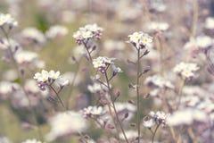 Wildflowers άνθησης άνοιξη Στοκ εικόνα με δικαίωμα ελεύθερης χρήσης