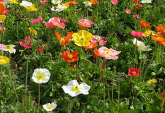 wildflowers άνοιξη Στοκ Φωτογραφίες