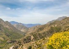 Wildflowers, βουνά SAN Gabriel, εθνικό δρυμός της Angeles, ασβέστιο Στοκ Φωτογραφία