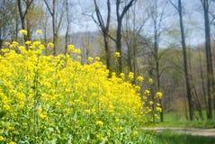 wildflowers βουνών Στοκ φωτογραφία με δικαίωμα ελεύθερης χρήσης