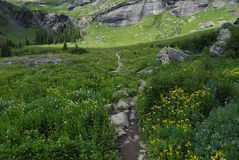 wildflowers βουνών SAN του Κολοράντο στοκ εικόνα
