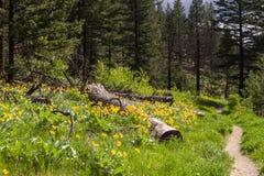 Wildflowers ιχνών φύσης στοκ φωτογραφία με δικαίωμα ελεύθερης χρήσης