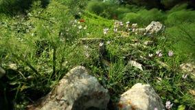 Wildflowers και θάμνοι χλόης βράχων φιλμ μικρού μήκους