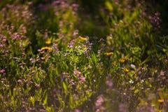 Wildflowers και χλόη Στοκ Εικόνες