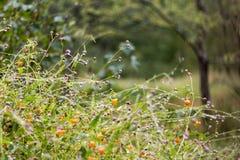 Wildflowers κατά τη διάρκεια της βρέχοντας ημέρας πτώσης Στοκ Εικόνες