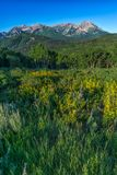 Wildflowers με τα δύσκολα βουνά στο υπόβαθρο Στοκ Εικόνα