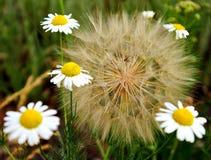 Wildflowers μια θερινή ημέρα Στοκ φωτογραφίες με δικαίωμα ελεύθερης χρήσης