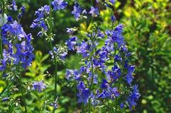 Wildflowers νέου Στοκ εικόνες με δικαίωμα ελεύθερης χρήσης