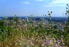 Wildflowers πέρα από τη εικονική παράσταση πόλης Στοκ Εικόνα