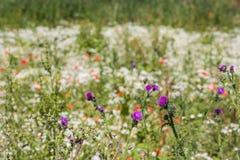 Wildflowers που ανθίζει και που βλαστάνει Στοκ εικόνα με δικαίωμα ελεύθερης χρήσης