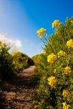Wildflowers που ανθίζει στη εθνική οδό Στοκ εικόνα με δικαίωμα ελεύθερης χρήσης