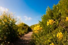 Wildflowers που ανθίζει στη εθνική οδό Στοκ Εικόνες