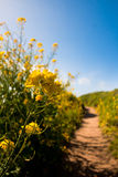 Wildflowers που ανθίζει στη εθνική οδό Στοκ φωτογραφίες με δικαίωμα ελεύθερης χρήσης
