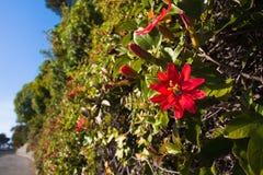 Wildflowers που ανθίζει στη εθνική οδό Στοκ φωτογραφία με δικαίωμα ελεύθερης χρήσης