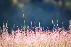 Wildflowers σε έναν τομέα και έναν ήλιο Στοκ Φωτογραφίες