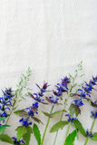 Wildflowers σε ένα άσπρο υπόβαθρο ιστού Στοκ Εικόνες