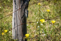 Wildflowers σε μια θέση φρακτών Στοκ Εικόνα