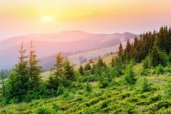 Wildflowers στα βουνά στο ηλιοβασίλεμα στοκ εικόνα