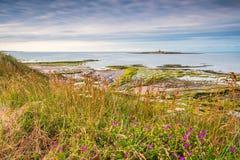 Wildflowers στους χαμηλούς αμμόλοφους Hauxley Στοκ φωτογραφία με δικαίωμα ελεύθερης χρήσης