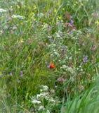 Wildflowers στο αεράκι Στοκ Εικόνες