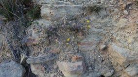 Wildflowers στο ανάχωμα βράχου Στοκ Φωτογραφίες