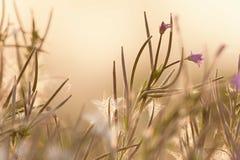 Wildflowers στο φως βραδιού Στοκ εικόνα με δικαίωμα ελεύθερης χρήσης