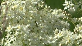 Wildflowers την άνοιξη σε ένα λιβάδι απόθεμα βίντεο