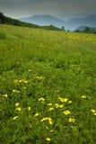 wildflowers χάσματος s τροχιστών Στοκ Φωτογραφία