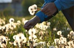 wildflowers букета Стоковое Изображение RF