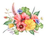 Wildflowers Букет красных и желтых мака, cornflowers, стоцвета и трав Иллюстрация акварели нарисованная рукой Иллюстрация штока