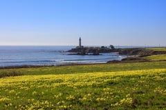 Wildflowers вдоль береговой линии Калифорния Тихим океаном стоковое фото rf
