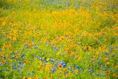 Wildflowers весеннего времени Стоковое Фото