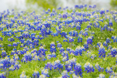 wildflowers весны света одуванчика bokeh стоковое изображение