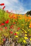 wildflowers весны Стоковое фото RF