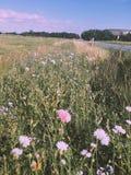Wildflowers в Дании Стоковая Фотография