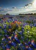Wildflowers в позднем вечере Солнце Стоковые Изображения RF