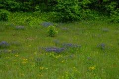 Wildflowers в поле в весеннем времени стоковые изображения