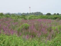 Wildflowers в поле Стоковое фото RF