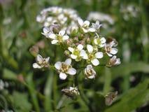 Wildflowers в саде Цветение цвета Стоковые Изображения