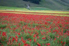 Wildflowers в Умбрии Италии Стоковое фото RF