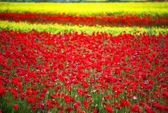 Wildflowers в Умбрии Италии Стоковое Изображение RF