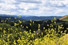 Wildflowers горного склона Стоковая Фотография