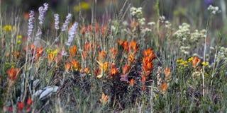 wildflowers горы утесистые Стоковое Фото
