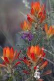 wildflowers горы утесистые Стоковые Изображения RF
