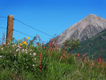 wildflowers горы утесистые Стоковая Фотография